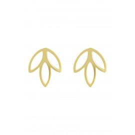 Tulipan Oro